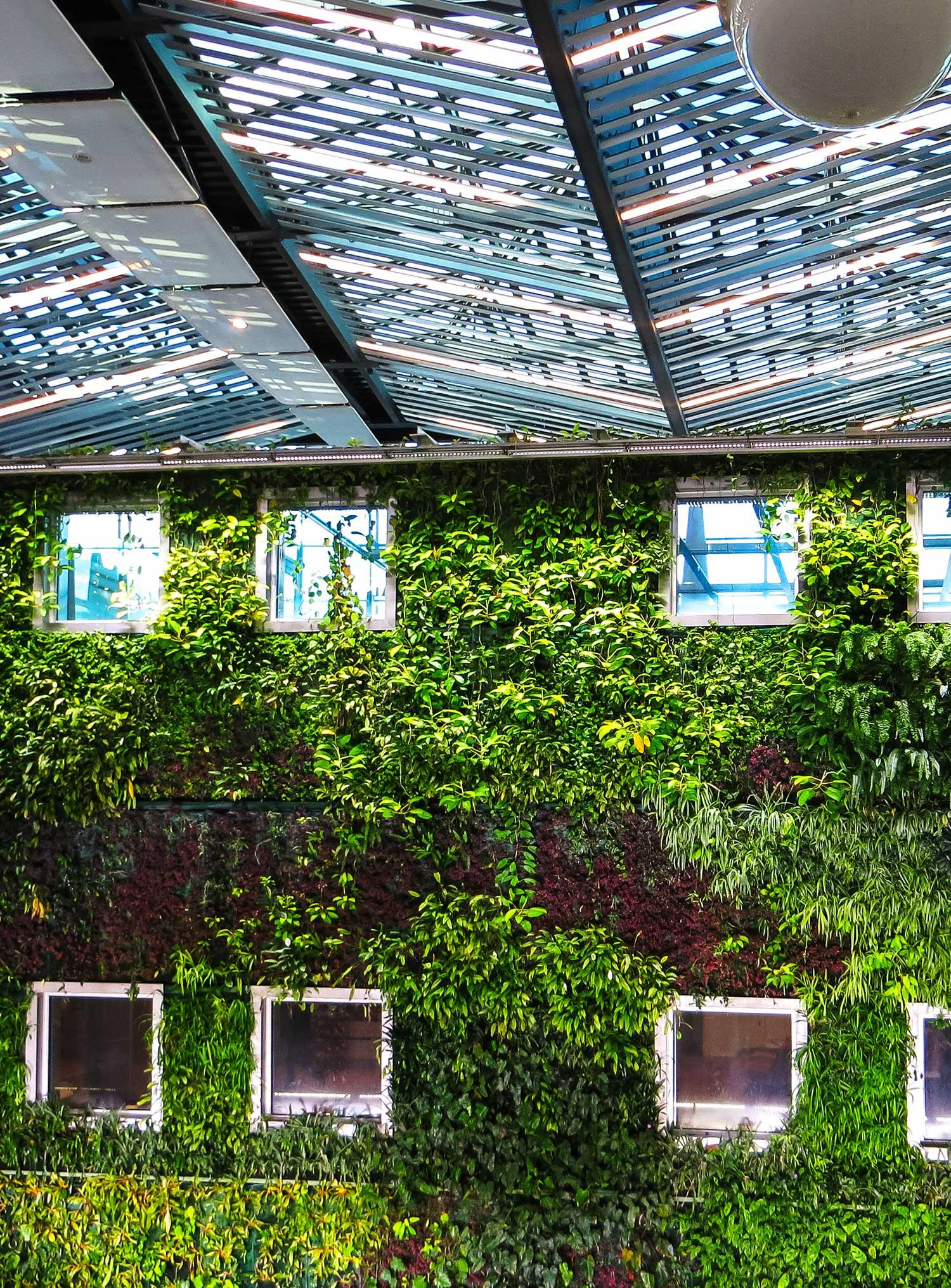 Växter på utsidan av en byggnad